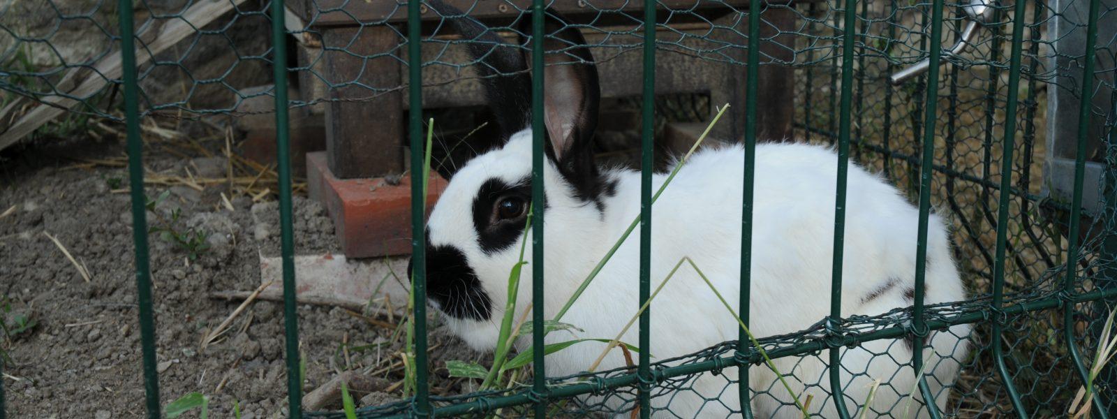 Pilpoil, le lapin mascotte des maternelles